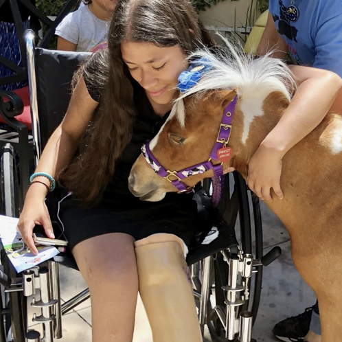 Giving back: Mini Therapy Horses