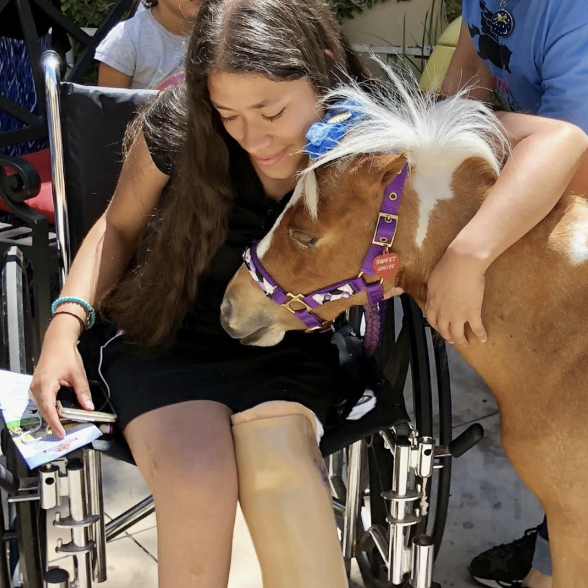Mini Therapy horses and Life Equestrian