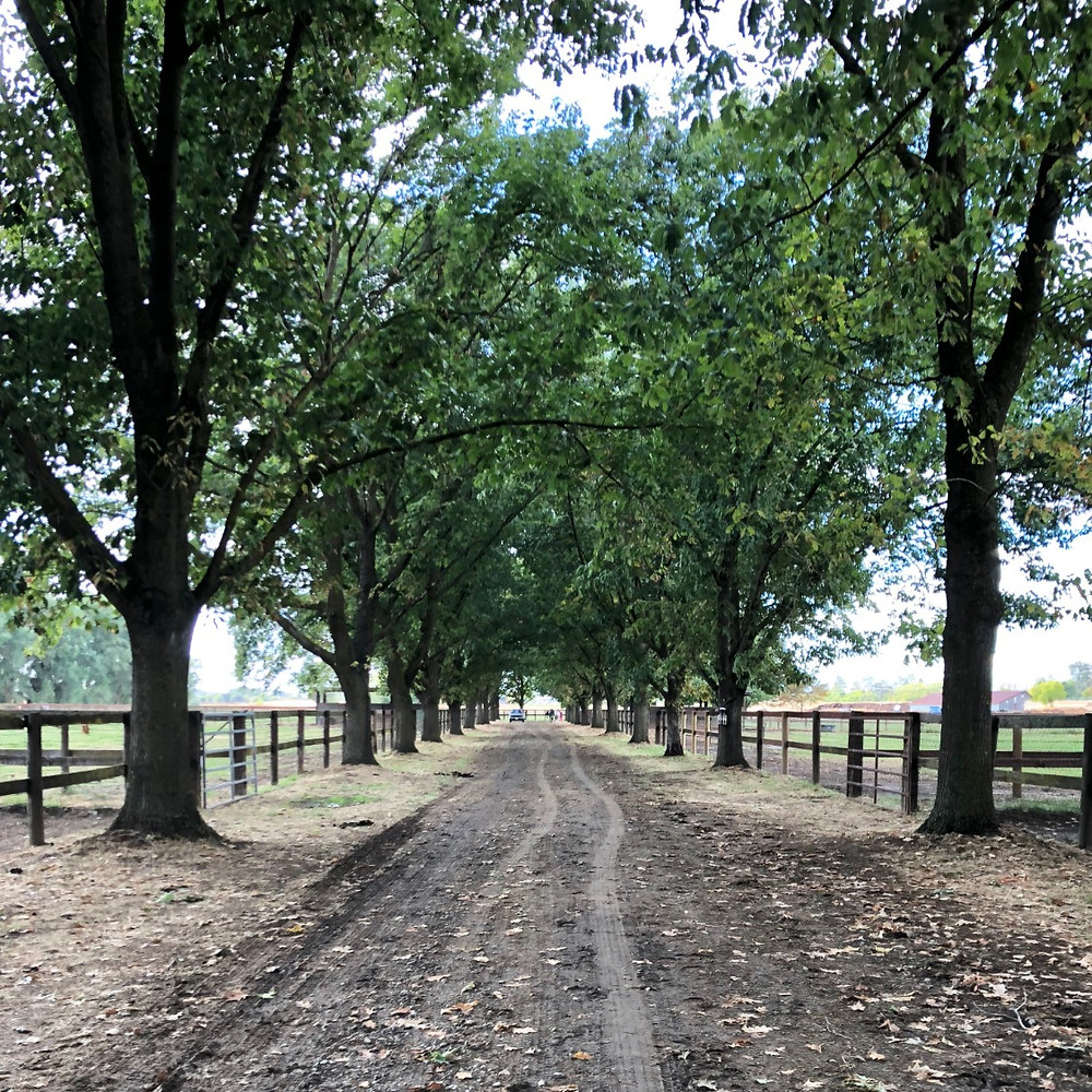 Treadway Stables