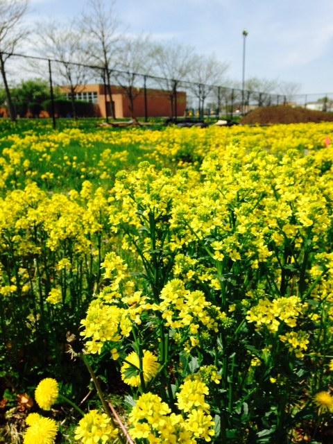 spring time before garden