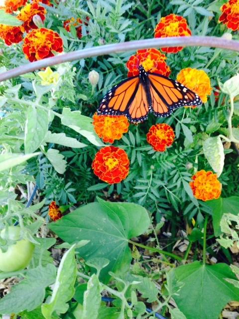 Garden Sept 22- 1