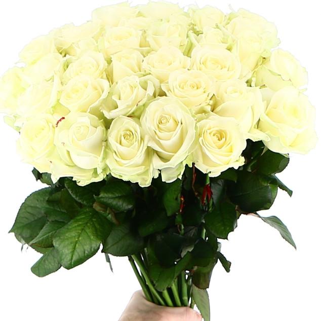 Rosen PUR Weiß