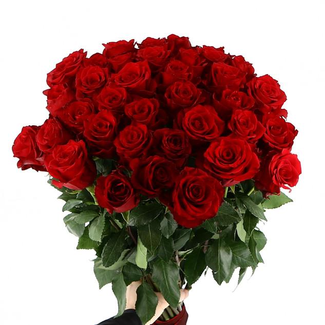 Rote Rosen Bahlmann