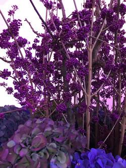 Blumen Bahlmann bahlmannflowers Hortensien Callicarpa