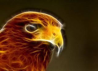 Ayahuasca Animal Visions: The Eagle