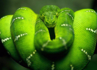 Ayahuasca Animal Visions: The Snake