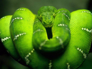 Ayahuasca Animal Visions: The Snake