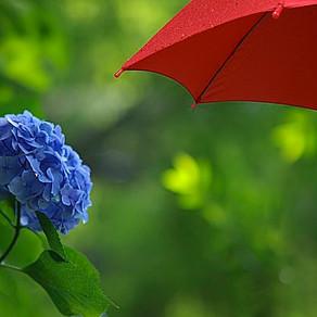 梅雨の時期のコンディショニング