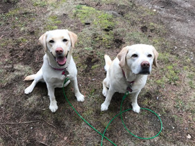 Lola and Lucy Lower 1.jpg