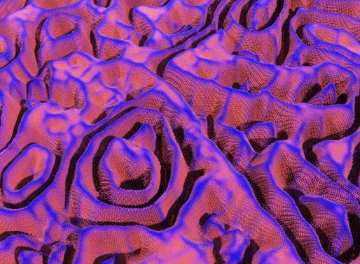Week 9: Coral Test