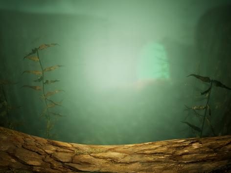 Aqua Jungle