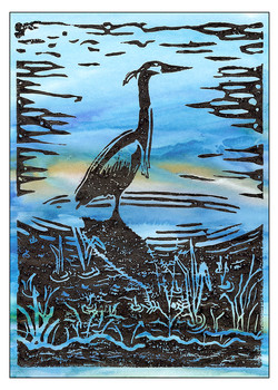 Blue Blue Heron