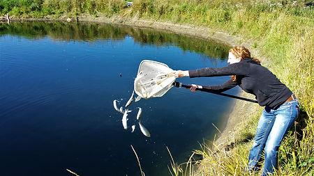 Jac dumping Fish Cropped 2.jpg