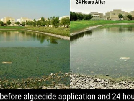 How to Control Algae