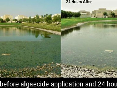 How to Control Algae