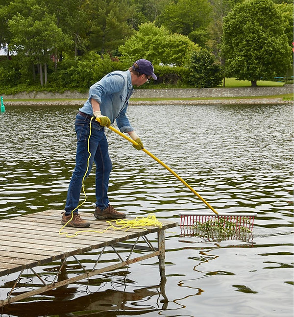Weed raker collecting and cleaning weeds and algae in low aeration ponds or lakes