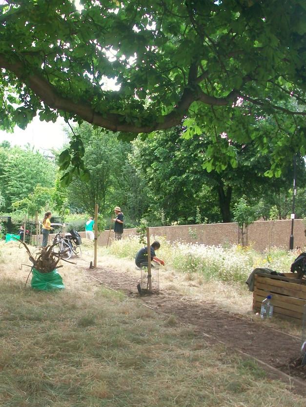 Swedenborg Square Orchard