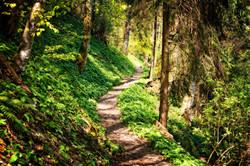 Hiking-Trail-No-People-2