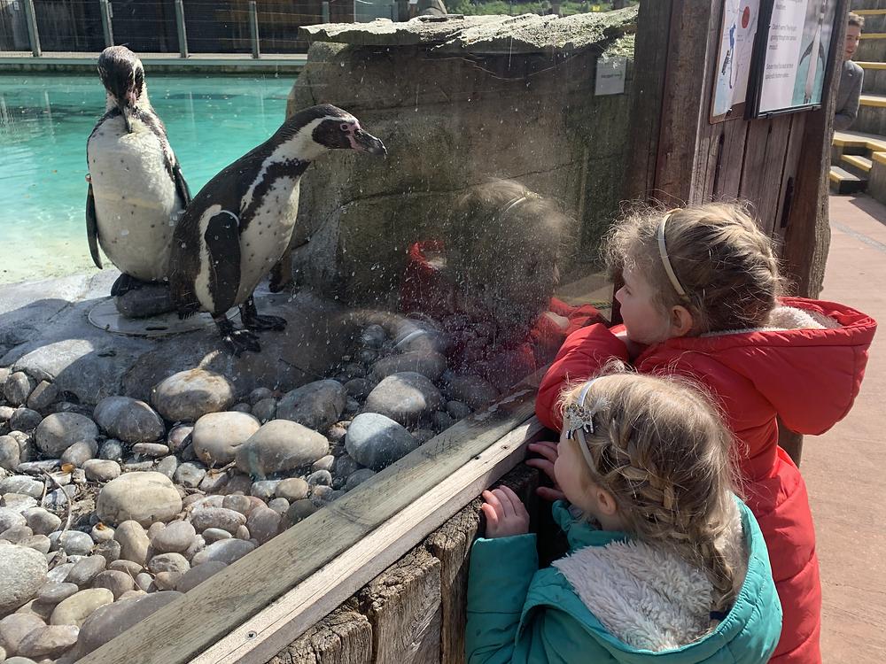 Children watching penguins