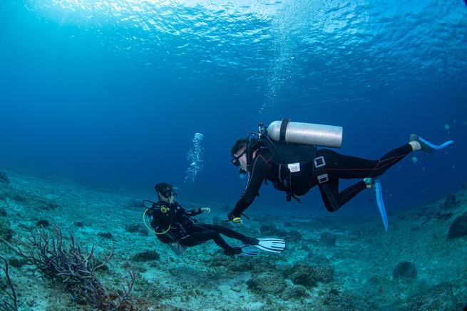 Guided dives Cozumel.jpg
