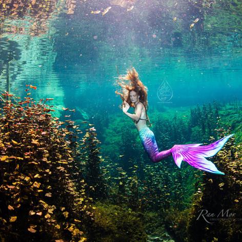 Mermaid Sara2.jpg