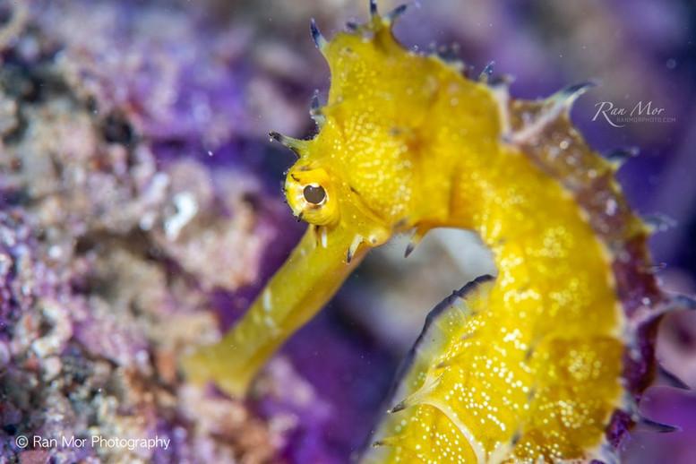 Macro underwater Cozumel.jpg