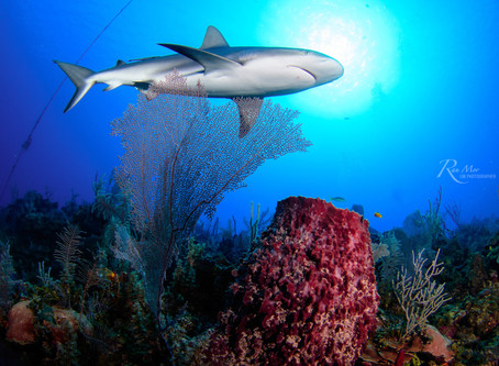 5 Biggest shark myths and misconceptions