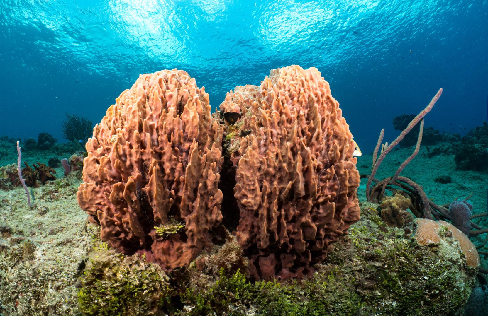 Cozumel Diving.jpg