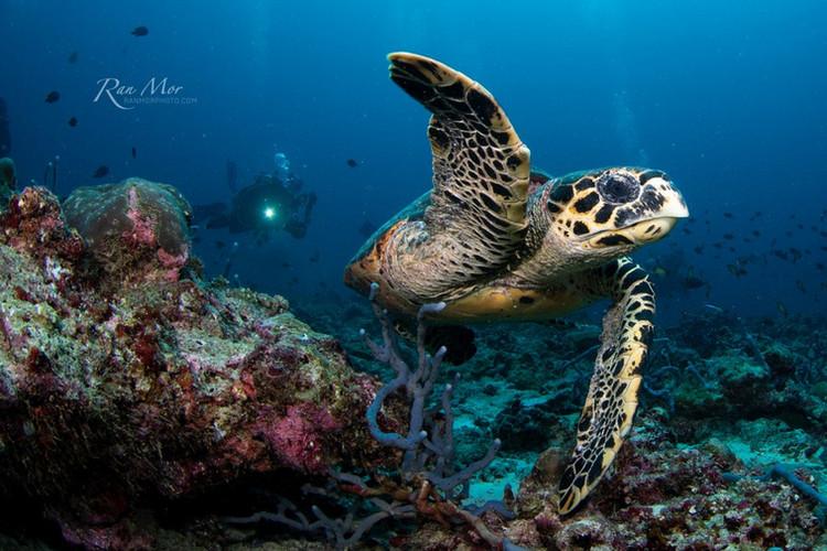 Sea Turtle Cozumel.jpg