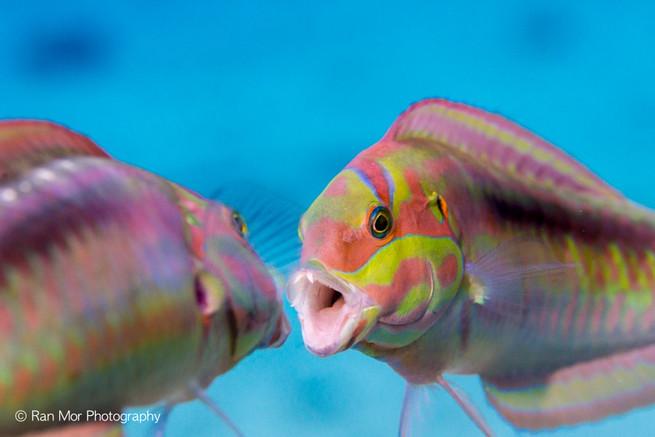 fish underwater cozumel.jpg