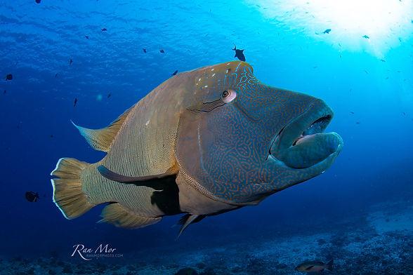 Palau Day 5_0099-Edited.jpg