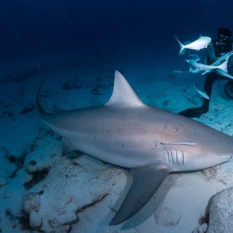 Bull Sharks_00391.jpg