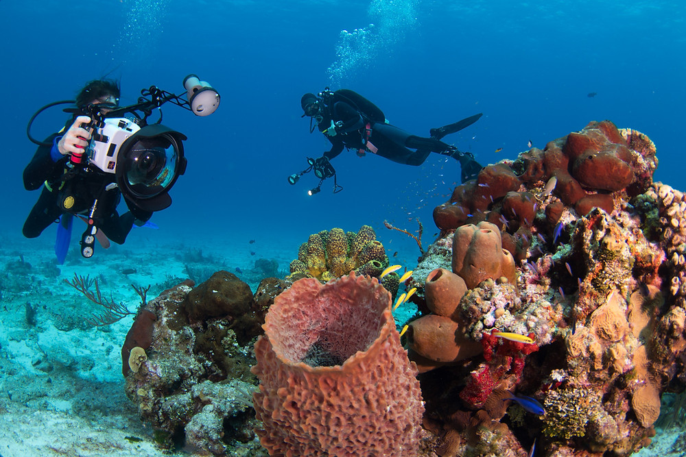 Underwater photography course in Cozumel