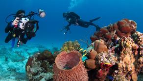 Underwater Photography in Cozumel