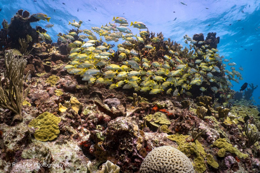 Coral Reef Cozumel.jpg