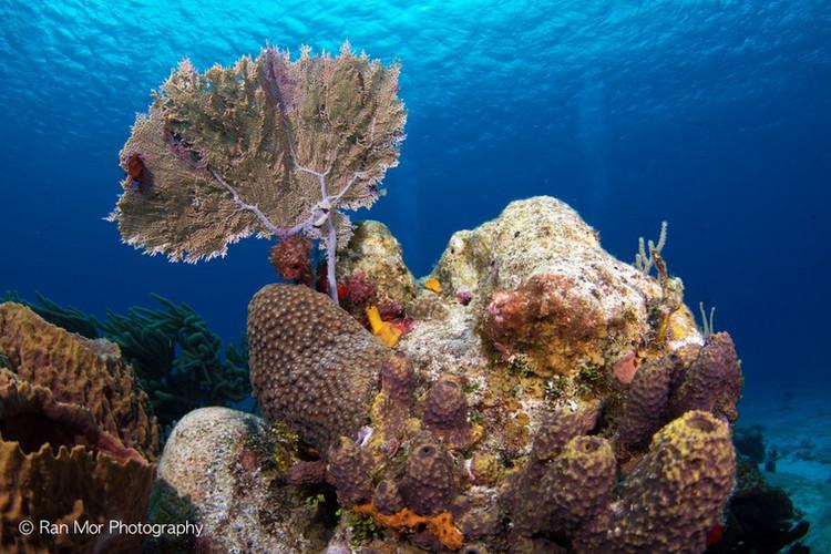 Corals Cozumel.jpg