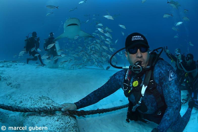 Diving Bull Sharks.jpeg