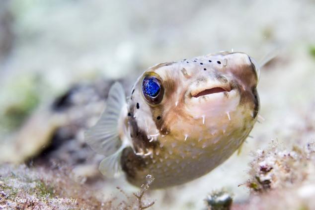Underwater world Cozumel.jpg