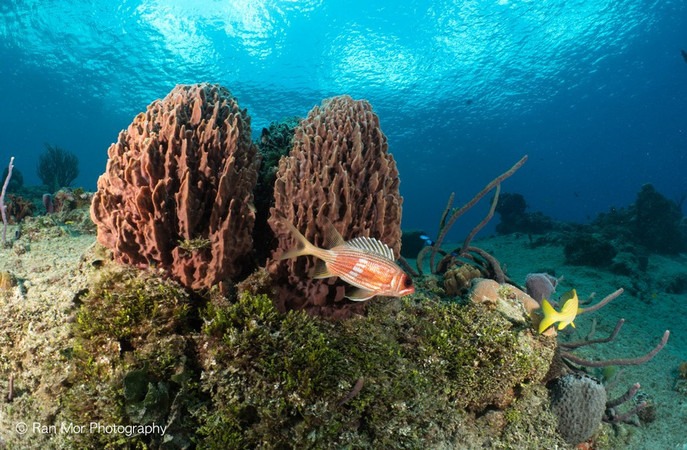 Cozumel Coral and fish.jpg