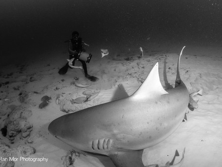 Bull Shark Diving in Playa del Carmen, Mexico