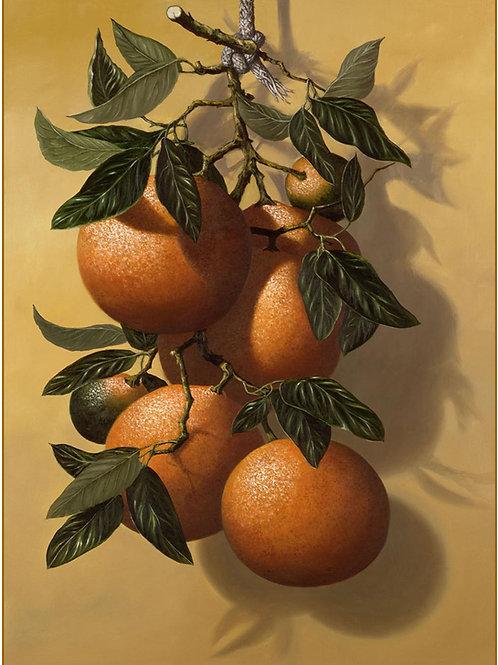 Arancie- Oranges