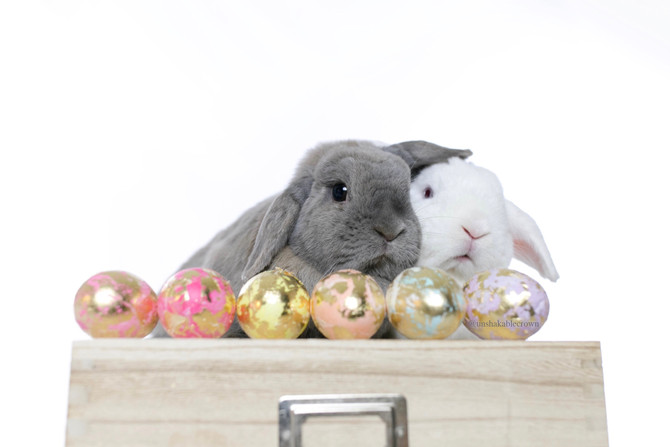 Our Real Easter Bunnies
