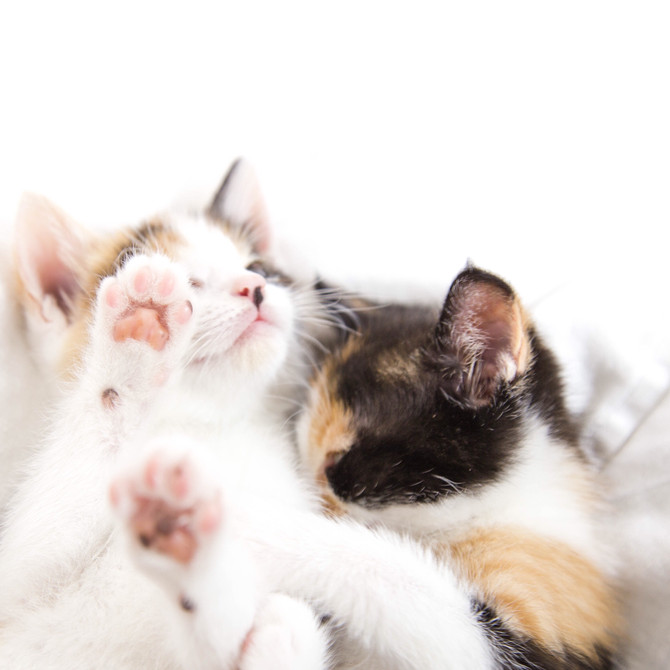 Cuddling Kittens