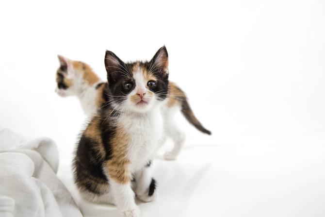Kitten Allergies