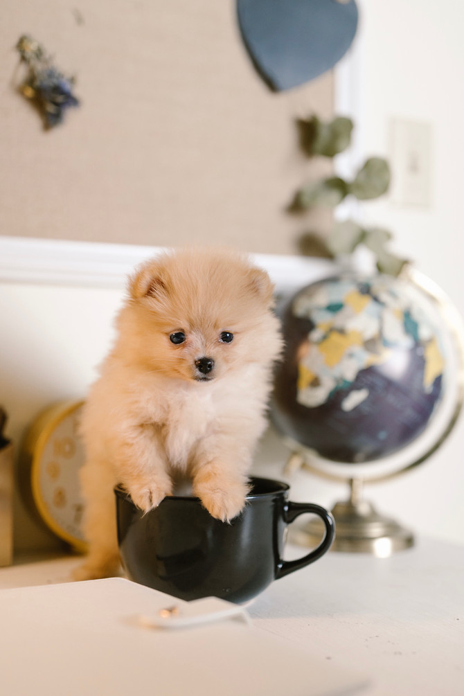 A Cup Of Cute