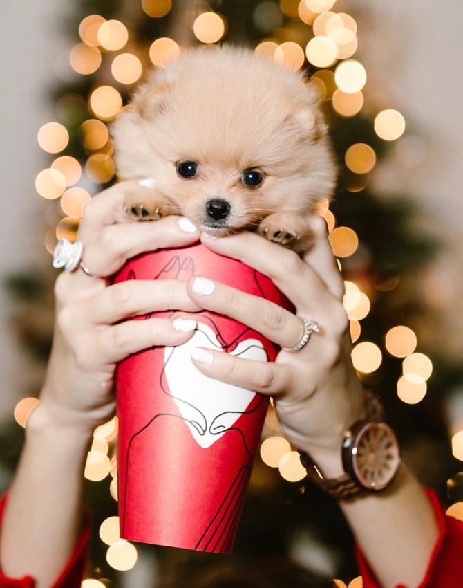 Grande Cup Of Cuteness