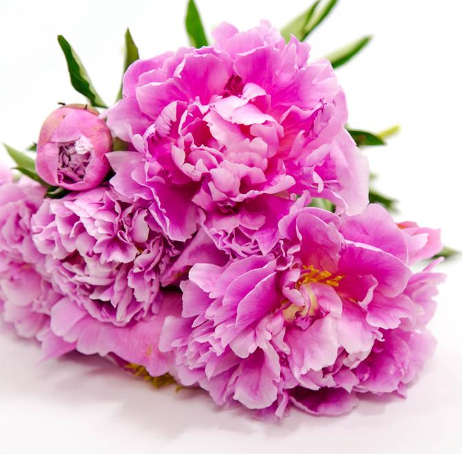 Flowers are my Love Language