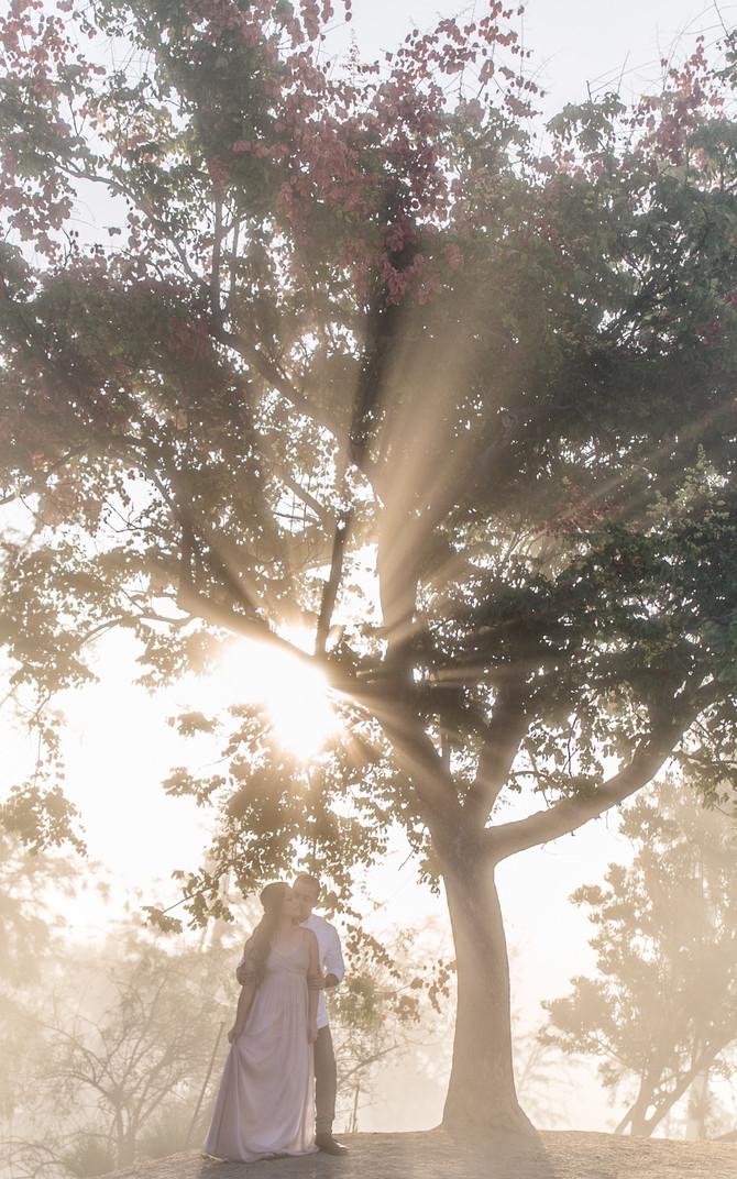 The Light Through The Fog