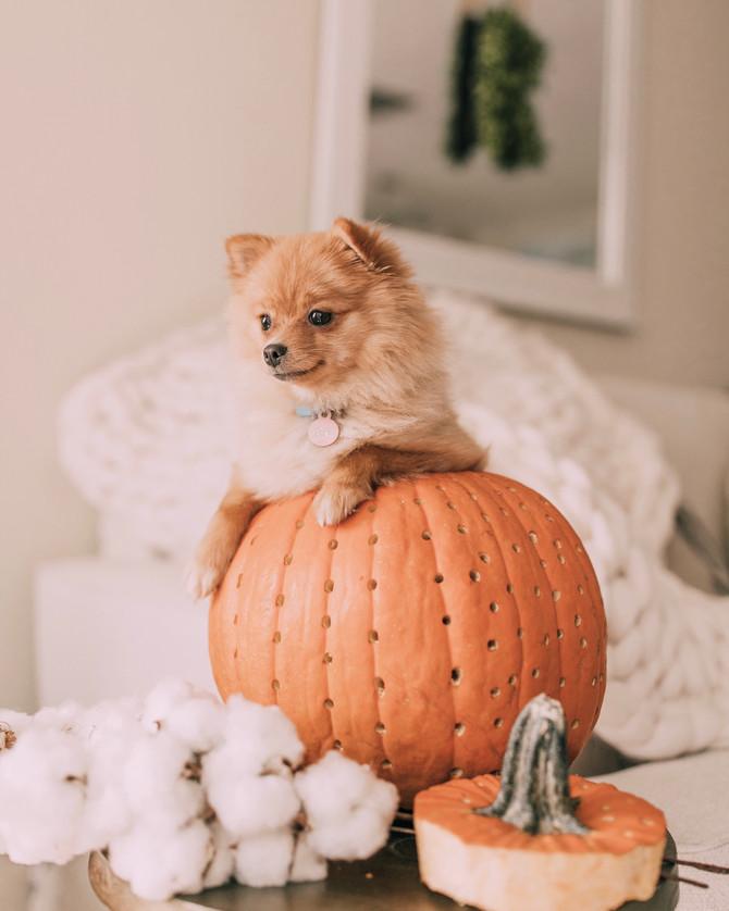 Our Little Pumpkin Honey Bear