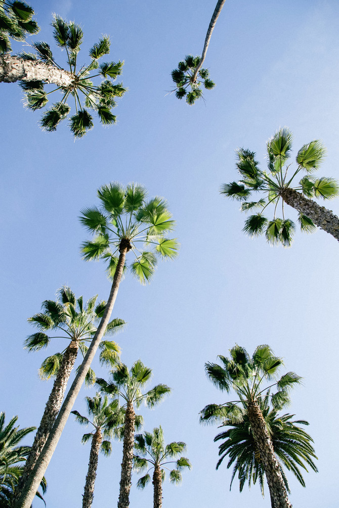 Palm Trees And Family Visits